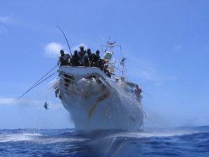 Catching tuna in the Pacific (Photo: SPC)