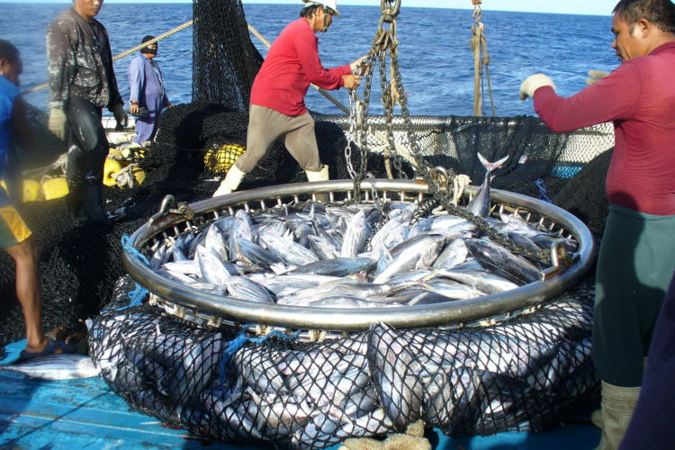 Survey shows focus on tuna stocks