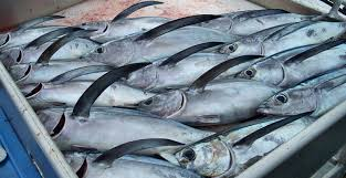 FFA's TUNApacific: A new space to talk about tuna for Palau