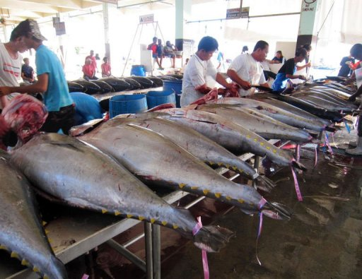 Understanding the Pacific fisheries roadmap