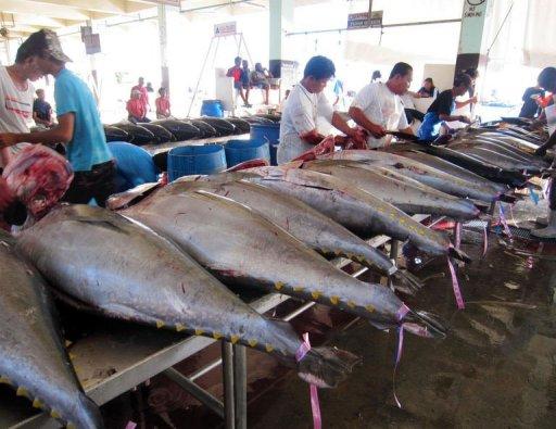 Understanding the Pacific fisheries roadmap