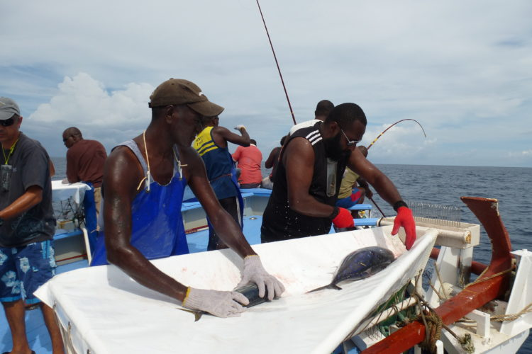 Tuna tagging in the Pacific – Papua New Guinea