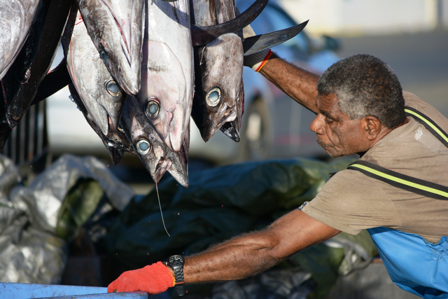Discussions on Albacore splits Pacific Tuna Commission