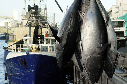 Legal Weapon: The potential breakthrough to bring down Illegal tuna fishers in Pacific waters