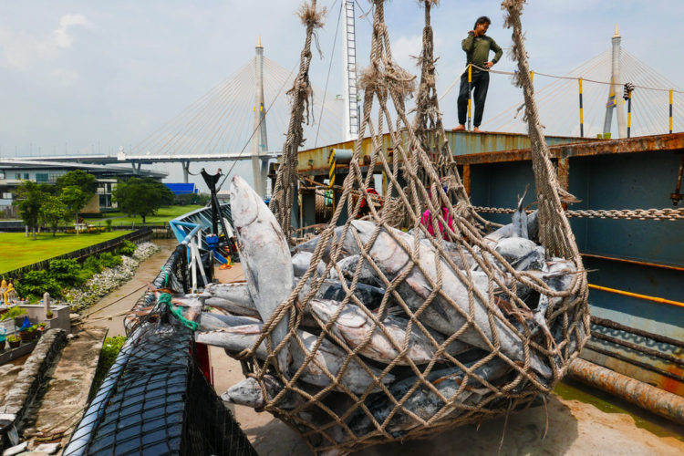Tuna caught on a PNG flagged vessel then transhipped in Majuro being unloaded in Bangkok - copyright Francisco Blaha