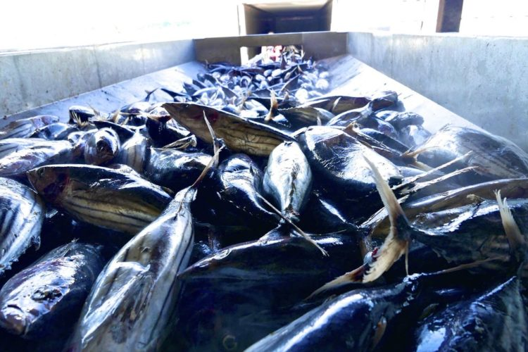 South Pacific regional fisheries management organisation: Council adopts new rules