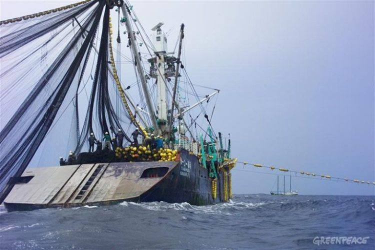 Purse seine tuna fishery supplying FCF Taiwan achieves MSC status