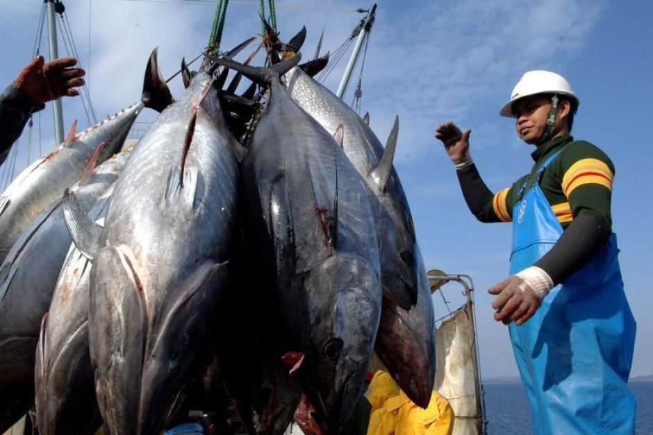 Tuna caught in Fiji. Photo: AFP.