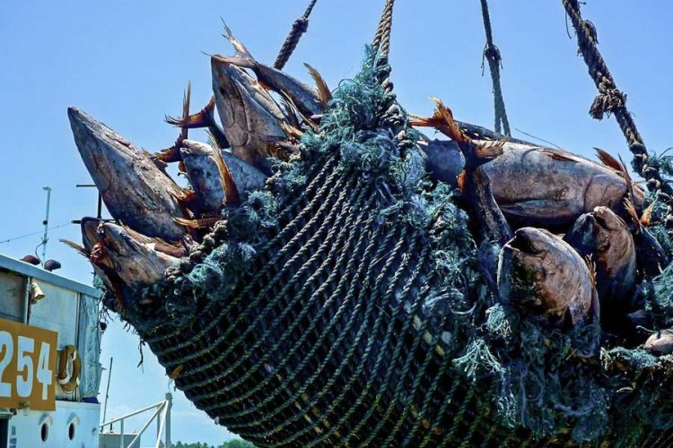 Pacific solidarity needed to get climate change embedded in Tropical Tuna Measure