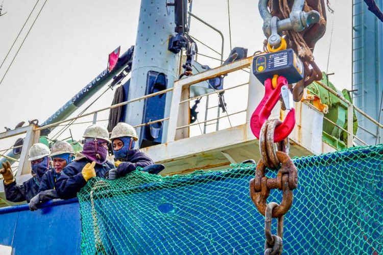 Testing hanging crane scales during tuna transhipment Majuro Marshall Islands. Hook with large chain hanging from it right side of image, on left side of image mean in hand hats on deck of ship holding a net. Photo Francisco Blaha.