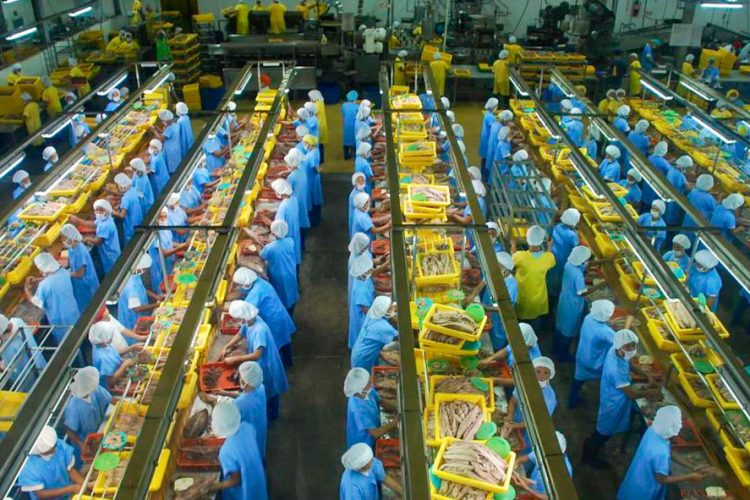 Tuna processing plant. Photo: Francisco Blaha.