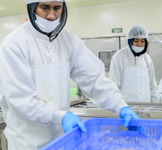 Two men wearing hair nets, face masks, gloves and aprons inside a room. One grasps a blue crate that holds tuna steaks.