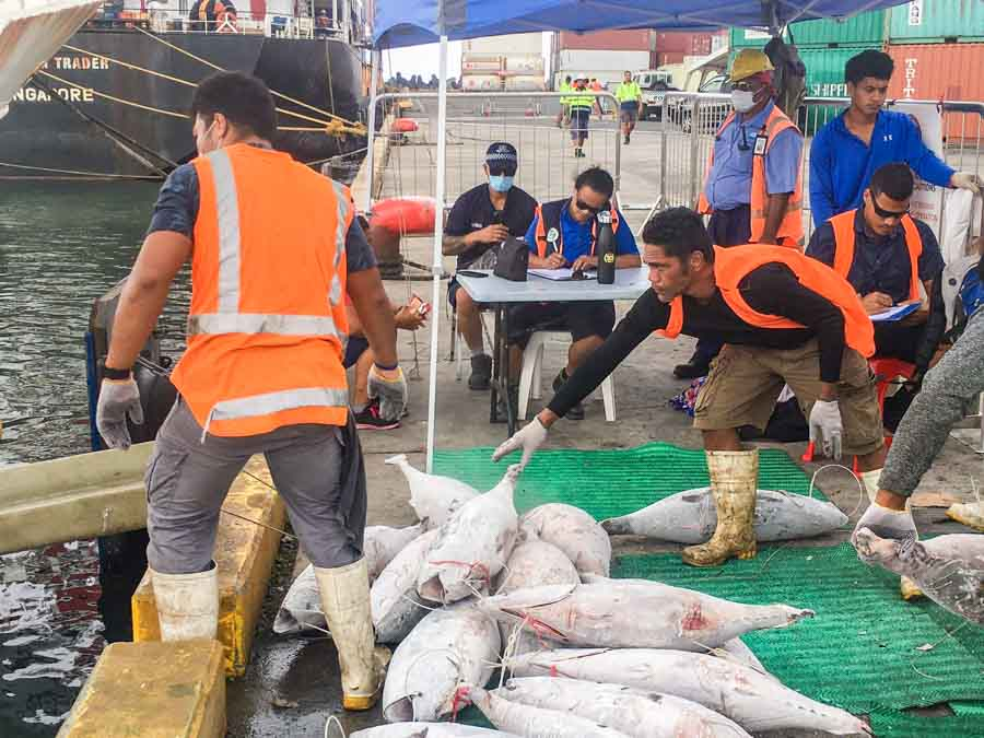Fisheries, Maritime and Ports Authority officers monitor a fishing vessel unloading under COVID-19 protocols in Apia Port, Samoa. Photo: Samoa NHQ.