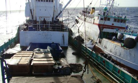 High seas tuna transhipment: what it is and why it should be reformed