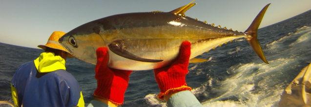 Tuna Pacific website to meet needs of oceanic fisheries community