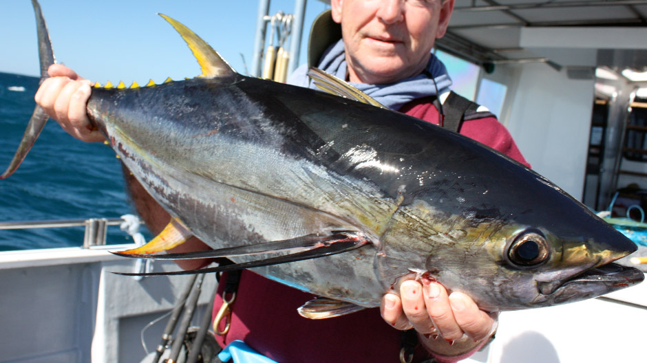Japan does not support US big-eye proposal at Tuna Commission