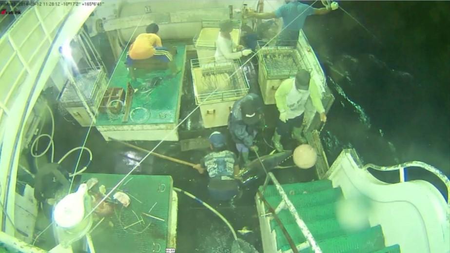 New system to help EEZ surveillance: Fiji fisheries minister
