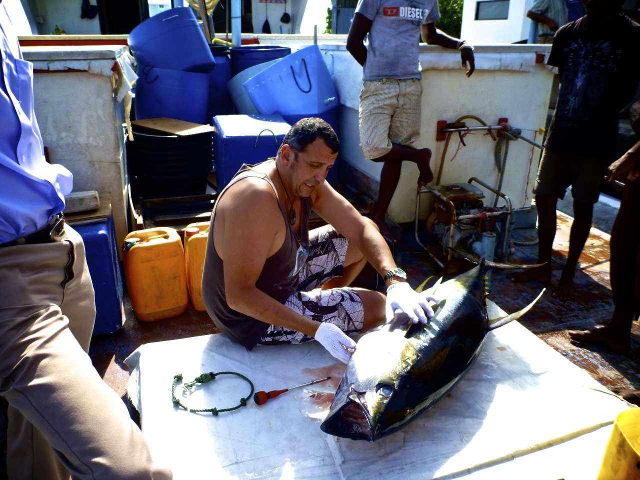 NGOs slam fishing nation delay tactics: stalemate on albacore tuna