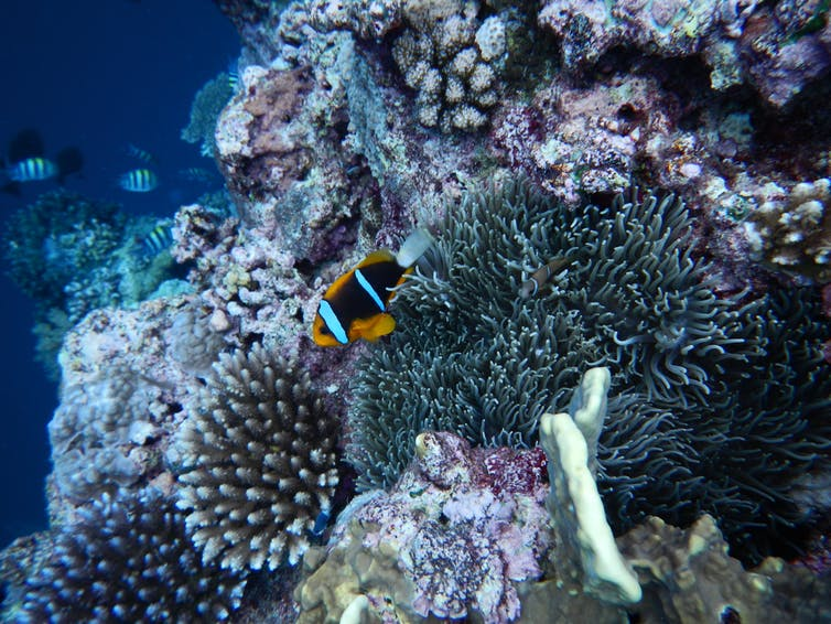 World Tuna Day 2021: A focus on protecting Palau's National Marine Sanctuary