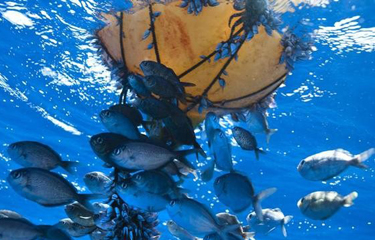 Pacific fisheries leaders highlight Tuna Commission action