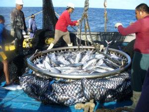 Catching tuna on boat