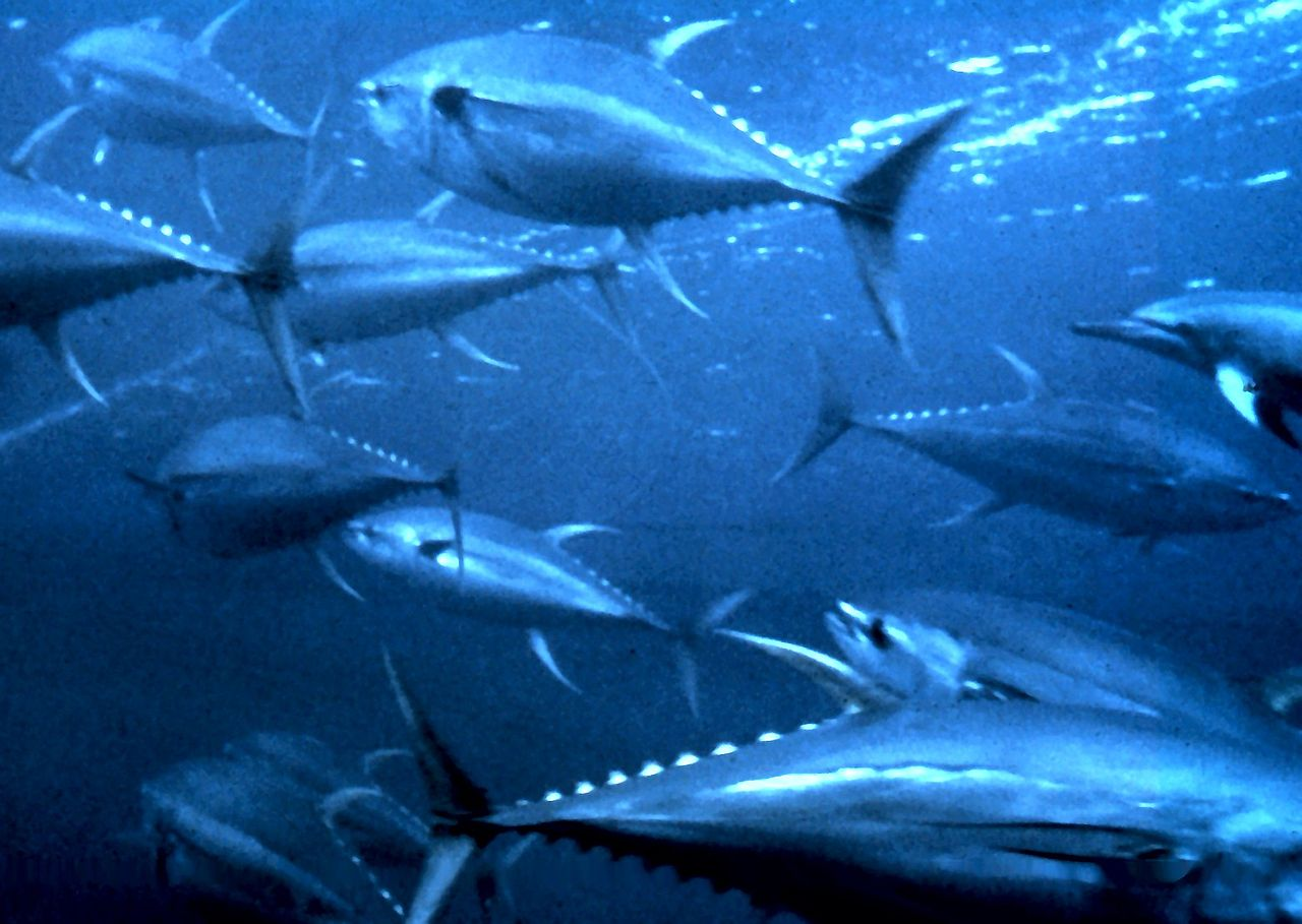 Pacific students take part in tuna diplomacy program