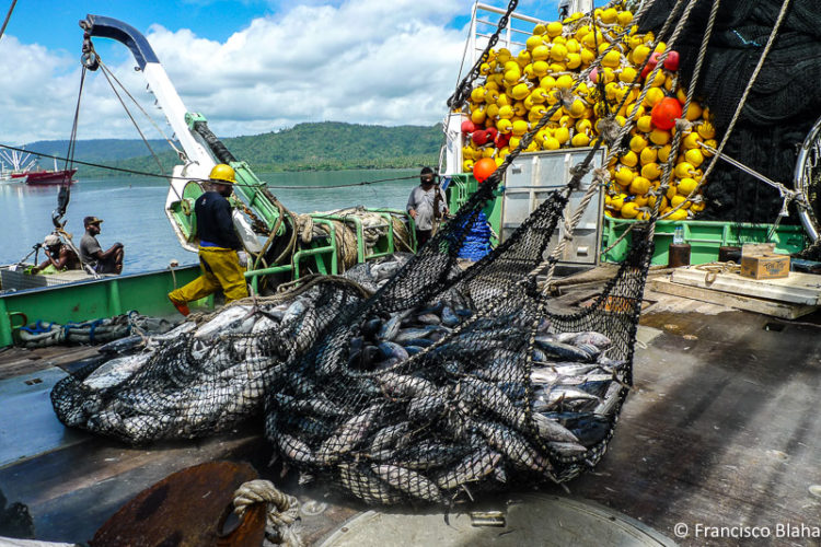 Scientists recommend catch limits for Pacific fishery