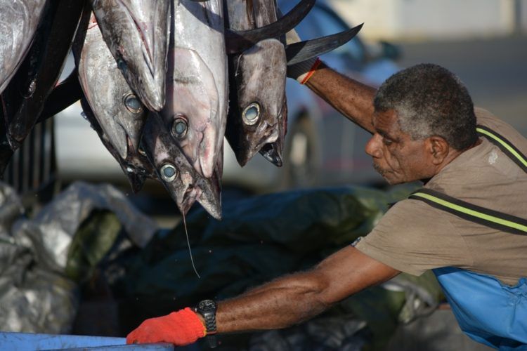 Livelihoods on the line as Pacific nations unite to fight for albacore tuna industry