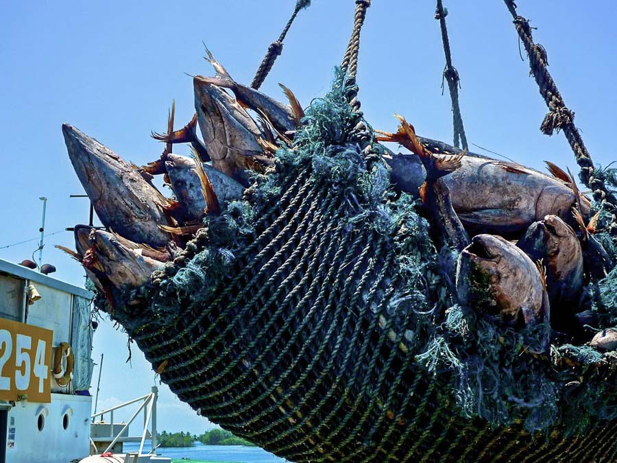 PNG's certified tuna fishery strengthens responsible sourcing