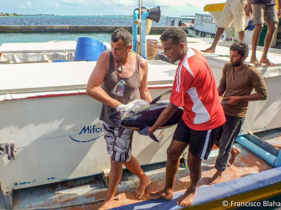 Francisco (left) and crew member unload frozen tuna during training given by Francisco in the Maldives, 2012 (Photo: Francisco Blaha)