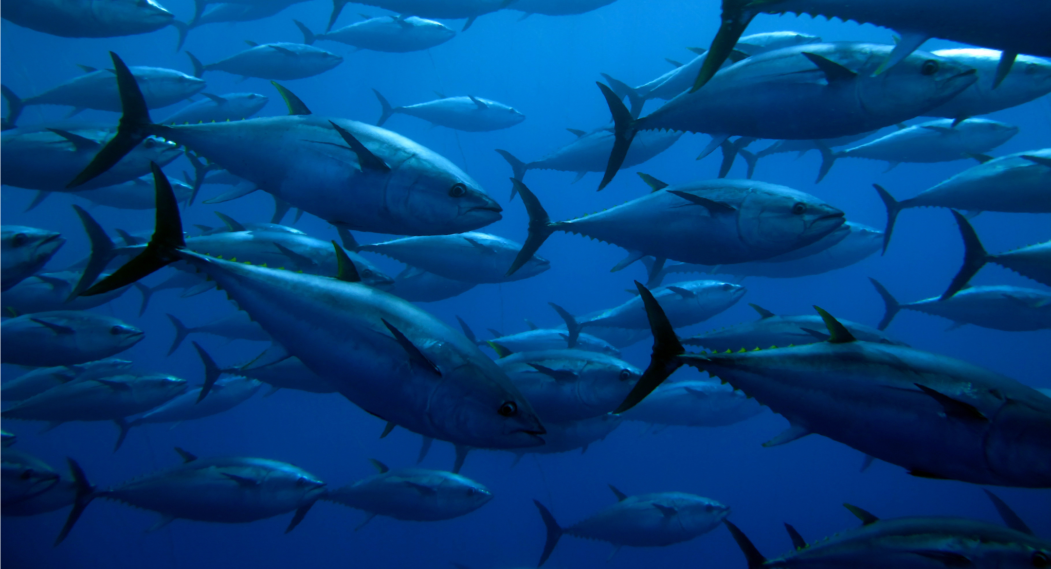 FFA fisheries ministers progress observer and crew safety and longline fisheries development