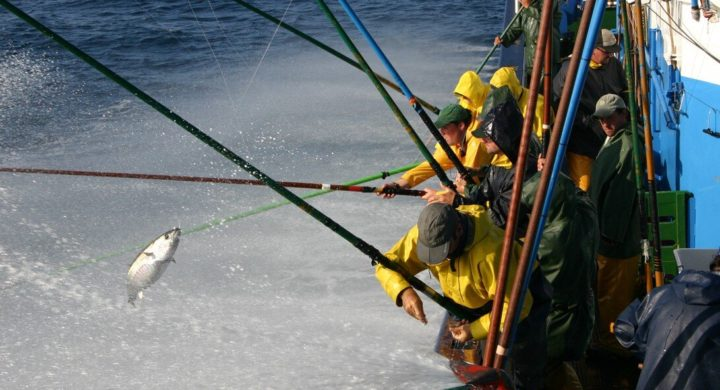 Study: Climate change will redistribute tuna populations