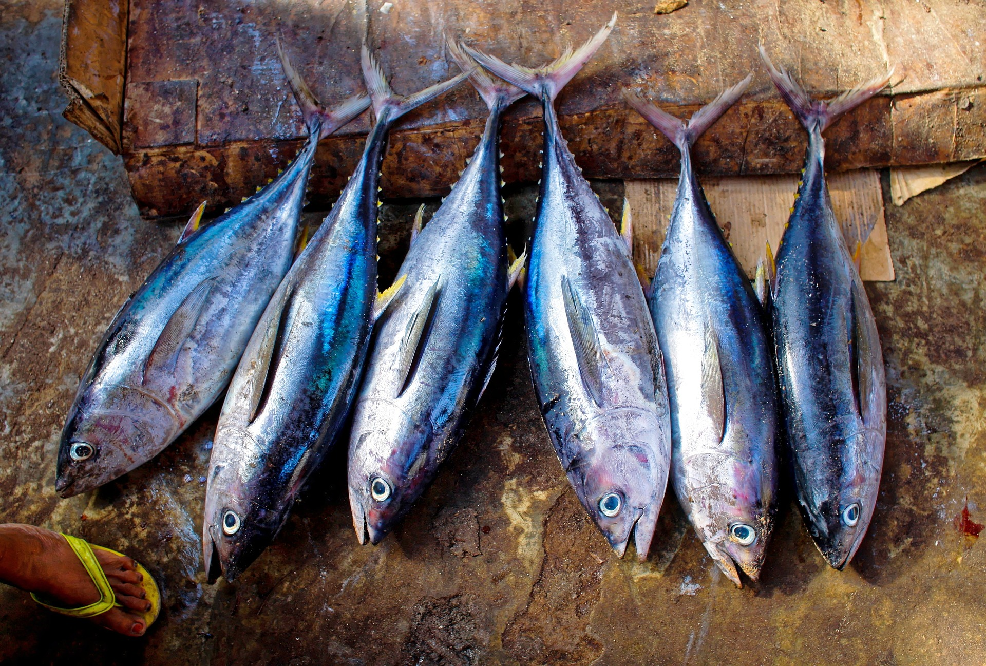 IATTC leaves tropical tuna unmanaged as meeting fails to reach consensus by one vote