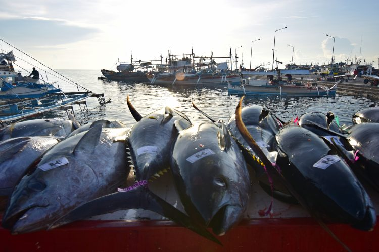 BFAR's Tuna Management Plan