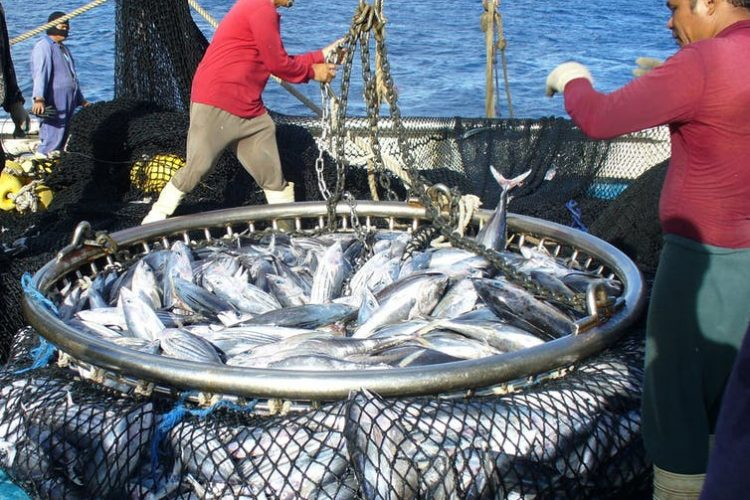 Tuna Commission adopts FFA climate-change resolution