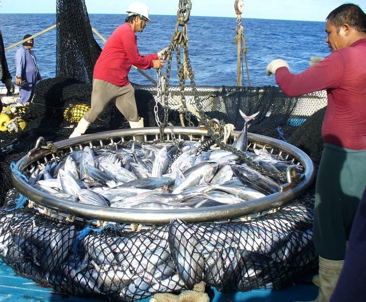 Tuna Commission adopts FFA climate-change resolution