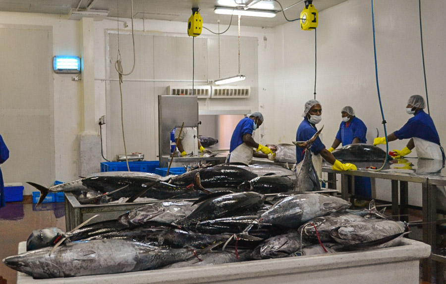Tuna Commission endorses work plan to manage South Pacific albacore sustainably