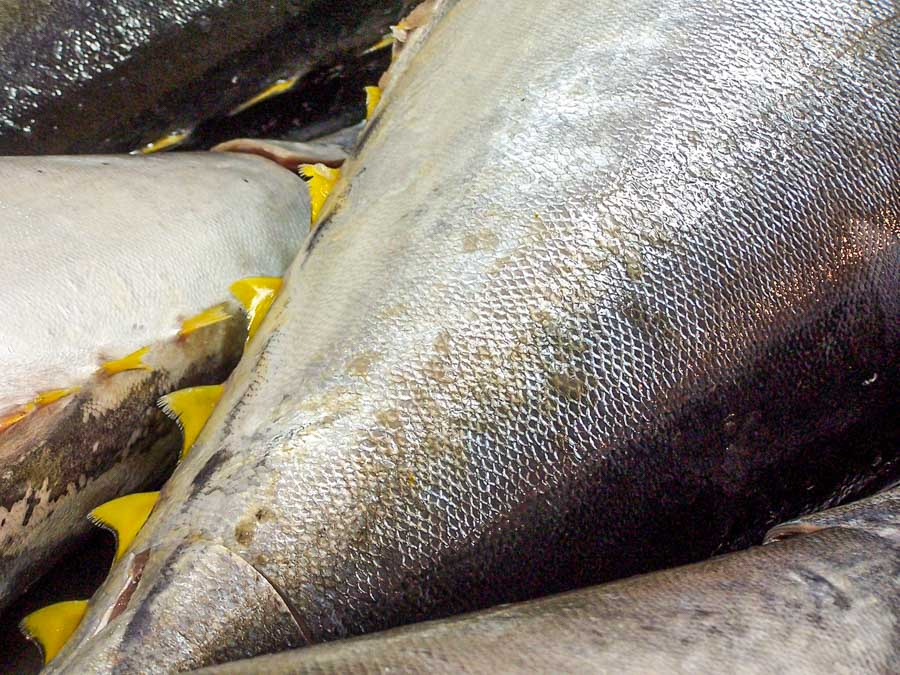 Pacific nations call on WCPFC members to combat impacts of climate change on tuna fisheries