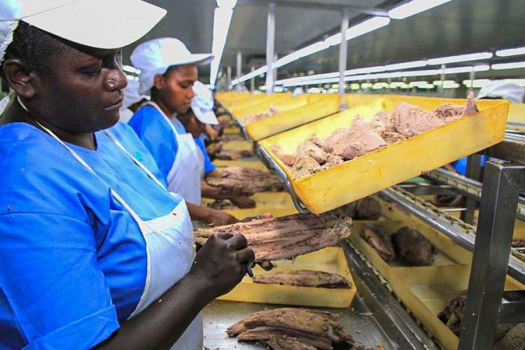 COVID-19 threatens Solomon Islands' global tuna industry