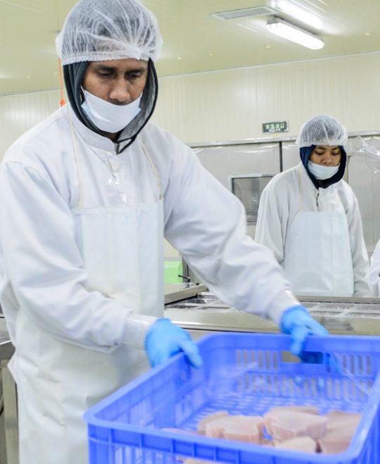 On World Tuna Day, the Pacific states focus on flourishing