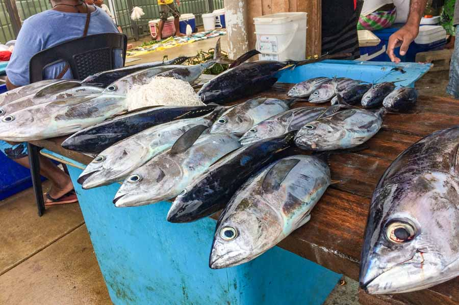 A table of bigeye tuna of different sizes for sale fresh at Gizo Fish Market, Solomon Islands. Photo George J Maelagi.