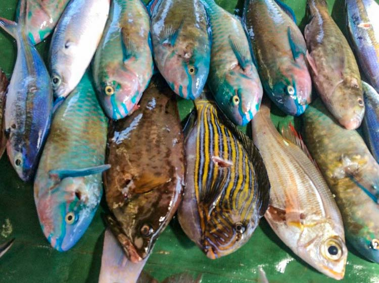 Different kinds of local fish laid out on plastic tarp for sale at Gizo Fish Market, Solomon Islands. Photo George Maelagi.